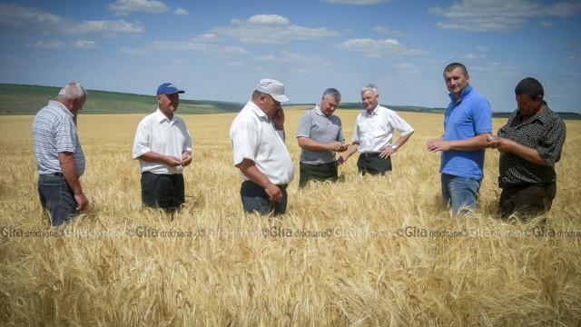 Agronomul Igor CONEA (al II-lea din dreapta) se mândrește cu grâul crescut de țarigrădeni