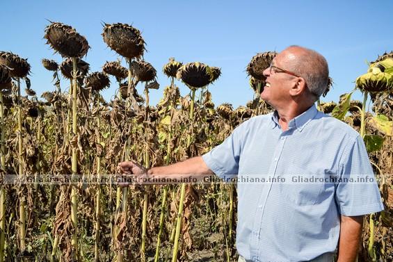 Deși anul agricol curent a fost unul nu prea favorabil, seceta afectând culturile agricole destul de serios, Victor ZBANCĂ și colegii lui au reușit să crească o roadă satisfăcătoare de floarea soarelui, dar şi de alte culturi agricole.