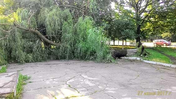 Большие деревья падали, вырванные с корнями