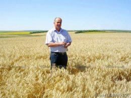 Анатолий НИКУ: стеной стоит пшеница золотая...