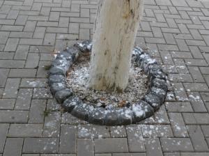 Așa arată trotuarul după ce au fost vopsiți copacii