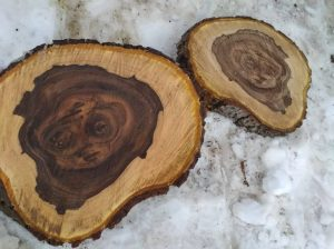 """Aşa arată """"minunea"""" din trunchiul de nuc, ce a crescut în grădina din satul Chetrosu"""