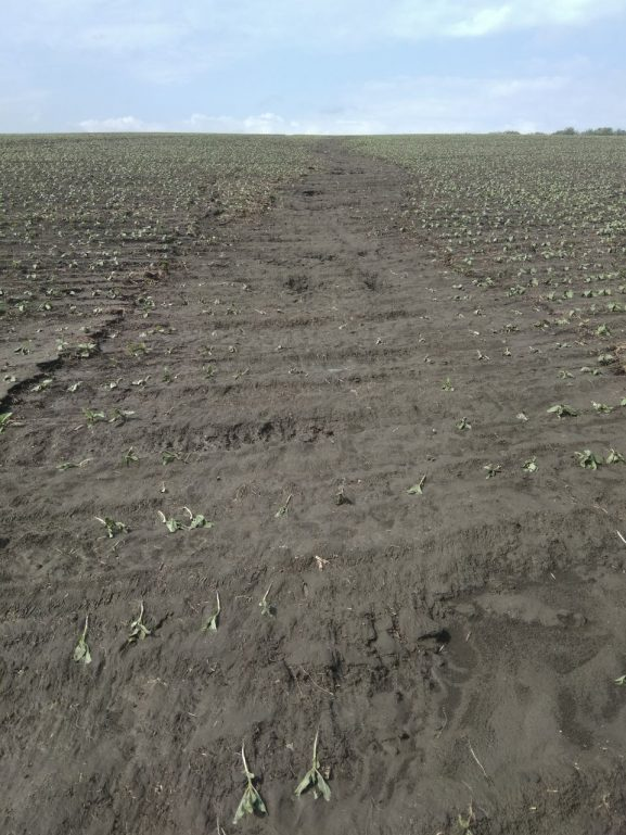 """Spălare de plante şi sol la """"Dealul Ochiualbean"""""""