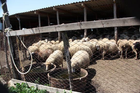 La stâna de oi a familiei Stefanco din Ucrainca, utilată din resurse europene