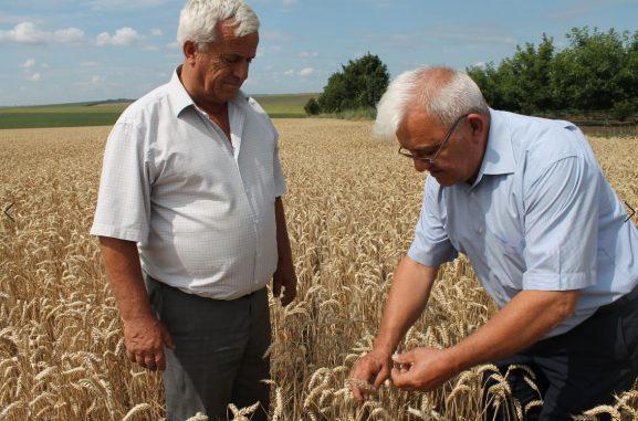 Nimic mai captivant decât discuţia a doi agricultori cu experienţă. La dreapta - Ion Nicora